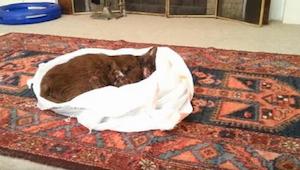 Zanim pochował kota położył go w salonie i wyciągnął kamerę, po chwili nie mogła