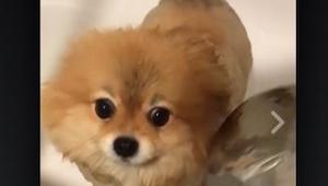 Ten pies ma bardzo nietypową pasję! Widzieliście kiedyś coś podobnego?