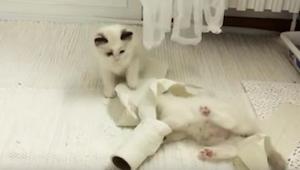 Szczeniaki i kocięta odkrywają papier toaletowy - i jak cudownie jest zaśmiecić