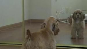 Niepewnie zbliżył się do lustra, a potem zrobił ostatnią rzecz, o jaką podejrzew