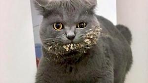 Po obejrzeniu tych 15 zdjęć zrozumiecie dlaczego koty mają taką opinię, a nie in