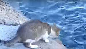 Myślałam, że ten kot zaraz wskoczy do wody, jednak to co zrobił sprawiło, że oni