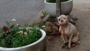 Listonosz zauważa wygłodzonego psa przywiązanego do drzewa - wtedy postanawia da