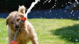 Nie wiesz, jak pomóc swojemu psu w upalne dni?  6 ważnych zasad.