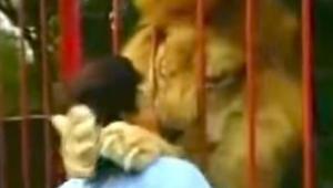Lew rzuca się kobiecie na ramiona, ale ona wcale się nie boi. Zobaczcie dlaczego