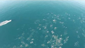 Mężczyzna filmuje ocean z drona. To co udaje mu się nagrać jest niewiarygodne!