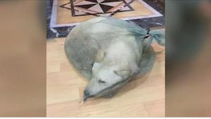 Pies miał być sprzedany jako... mięso. Wtedy do sklepu wszedł pierwszy klient.