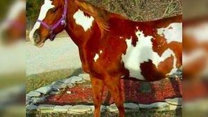 Zdjęcie tego konia wywołało burze wśród internautów - chodzi o to co widać na je
