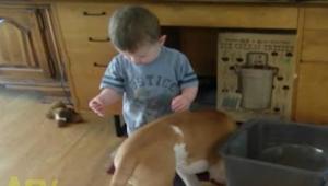Kiedy ten chłopczyk zaczął karmić psa, nie spodziewałam się tego co się stanie p