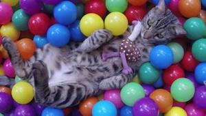 Najlepsze wideo tygodnia - kot, który nie posiada się z radości nad swoim własny