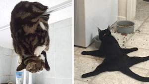 Tym 12 właścicielom udało się sfotografować najdziwniejsze zachowania swoich kot