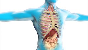 Przełom w medycynie - odkryto nowy organ w ciele człowieka!