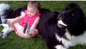 Pies leżał spokojnie kiedy mała dziewczynka postanowiła się na nim położyć. To u