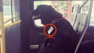 Pasażerowie byli oburzeni na widok psa samego w autobusie, dopóki nie zauważyli
