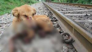 Kiedy kolejarze znaleźli tego psa musieli podjąć trudną decyzję...