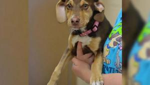 Pies wybiegł z domu jak szalony, gdy jego właściciel zobaczył powód nie mógł uwi