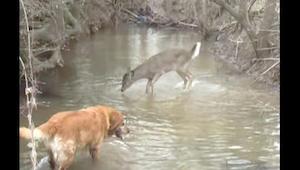 Sarenka zobaczyła psa i zaczęła podskakiwać, kiedy zrozumiałam dlaczego nie mogł