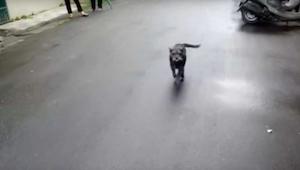 Pies zaginął na 6 dni - jego reakcja na widok właściciela sprawi, że zmięknie Wa