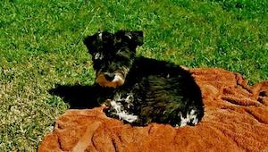 Świeżo upieczeni właściciele psów zdradzają 10 rzeczy, które zmieniły się w ich