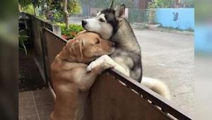 Pies ucieka z domu i pędzi do swojego przyjaciela. Kiedy zwierzęta w końcu się s