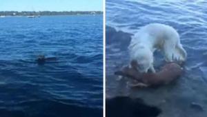 Kiedy pies zauważył coś w wodzie natychmiast rzucił się do niej. To co wyciągnął