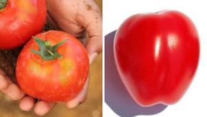 Jak rozpoznać produkty genetycznie modyfikowane i co w ogóle oznacza GMO?