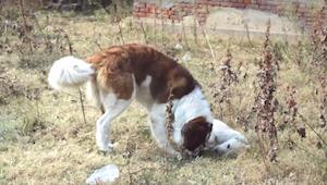 Psy z dwóch różnych światów zakochują się w sobie. Ich historia doprowadziła mni