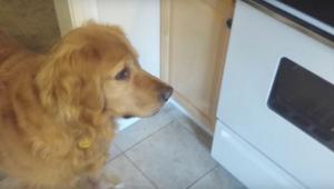 Pies nie chciał jeść suchej karmy. Dowiedz się jak jego właściciel poradził sobi