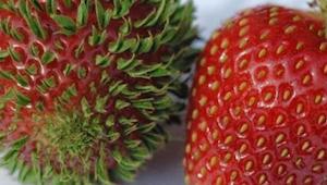 Zmutowane (i nie tylko!) owoce, które wystraszyły internautów :)