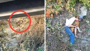Służby ratownicze bały się ratować psa ze stromego urwiska. Wtedy bezdomny zaryz