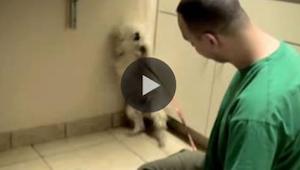 To co zrobił ten przerażony pies, gdy zdał sobie sprawę, że nie grozi mu niebezp