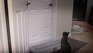 Kot domagający się pieszczot kontra śpiący właściciel - nie możemy przestać się