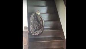 Kot zdecydował, że czas iść spać. To co robi gdy odkrywa, że jego posłanie jest