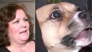 Adoptowany pies nie przestawał warczeć na drzwi - chwilę później jego nowa właśc
