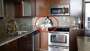 Właściciel zauważył, że jego pies dziwnie się zachowuje. Kiedy przyjrzał mu się