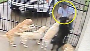 Ukryta kamera nagrywa, co listonosz robi psom na swojej trasie. To wideo podbiło