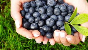 5 powodów, dla których powinniście wprowadzić do swojej diety borówki. Te owoce