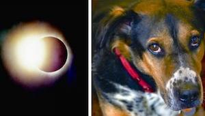 Dziwne zachowania zwierząt, wywołane zaćmieniem słońca. Nie miałam o nich pojęci