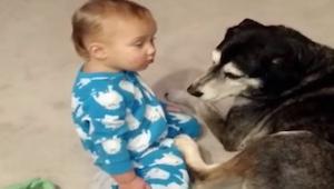 Chłopczyk próbuje przytulić psa, ale jest bardzo śpiący. Efekt końcowy jest prze