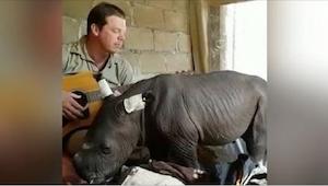 Nagranie tego nosorożca, którego matka porzuciła po narodzinach podbija internet