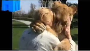 Kobieta opiekowała się lwicami, ale potem musiała je oddać do zoo. To, jak ją po