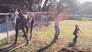Dwie dziewczynki zaczynają tańczyć, nie spuszczajcie jednak oczu z konia, przyćm