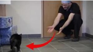 Oscar zachowuje się jak normalny kot, ale tylko popatrzcie na niego, gdy stanie