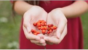 Wystarczy jeść 3 owoce jarzębiny dziennie, by w organizmie zaszły znaczące zmian