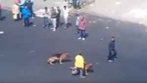 Mężczyzna rzucił cegłą w psy... Na szczęście karma wraca i to w mgnieniu oka!