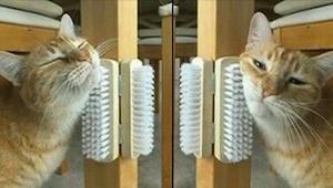 Twój kot umiera z nudów? W takim razie te 9 trików jest właśnie dla Ciebie!