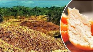 Wyrzucają tysiące ton skórek od pomarańczy w puszczy. 16 lat później świat jest