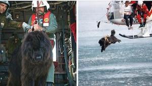 Pies rzuca się do lodowatej wody z helikoptera, żeby uratować tonącego. Niesamow