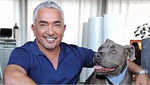 Dlaczego Cesar Millan nigdy nie krzyczy na swoje psy? Zobaczcie, co zaleca ekspe