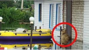 Gdy zobaczysz, co ten pies robił w czasie powodzi, zabraknie Ci słów!